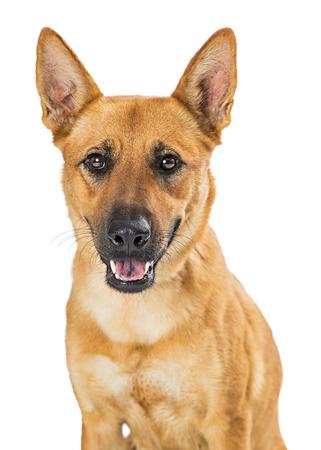 Cute smiling happy mixed large breed dog looking at camera closeup