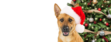 Happy pet dog in front of Christmas tree with room for text on white web banner or social media header Stock Photo