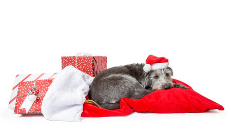 Tired Christmas dog sleeping on Santa Claus sack of wrapped gifts with room for text