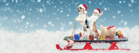 Cute funny dog and cat riding on a sleigh to deliver Christmas gifts in a snowy winter scene Stock Photo