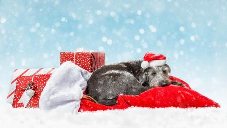 Tired Christmas dog sleeping on Santa Claus sack of presents with falling snow and light bokeh