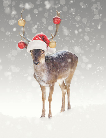 Funny Christmas reindeer wearing ornaments and santa hat 写真素材