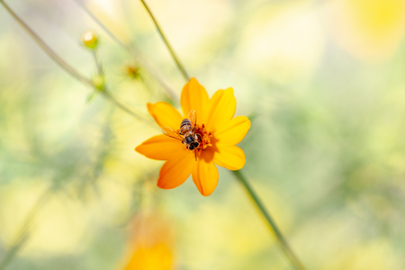 Closeup macro photo of bee sitting on yellow flower with blurred background