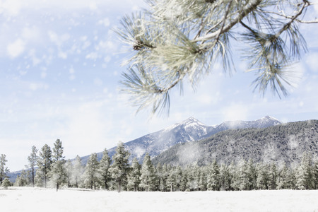 Snowy winter scene in the woods and mountains of Flagstaff, Arizona USA Banco de Imagens