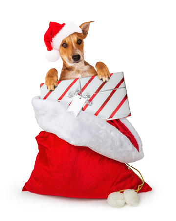 Cute dog in Santa Claus Christmas gift sack holding present with blank tag