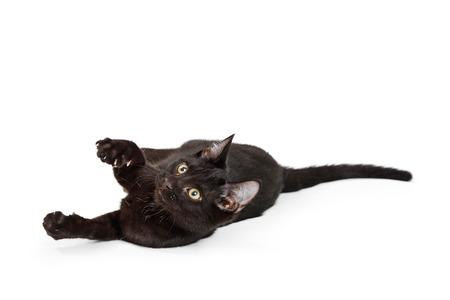 Cute playful black kitten rolling around on ground