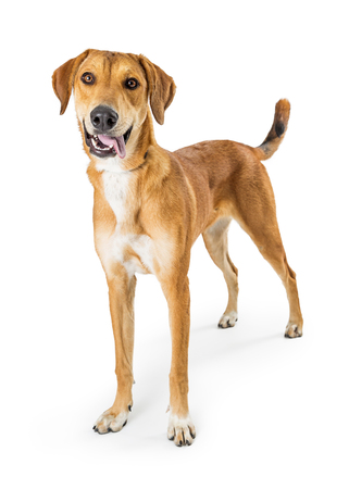 Dog with happy smiling expression standing on white background looking at camera
