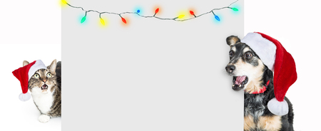 Funny Christmas dog and cat behind a blank placard, looking with shocked and surprised expressions wearign Santa Claus hats with lights hanging