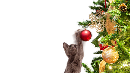 Cute kitten playing with red ornament hanging from Christmas tree with room for text in white copy space Stock Photo