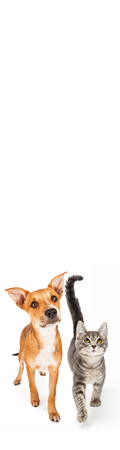 Cute dog and cat walking forward looking up into blank white room for text in tall vertical skyscraper web banner Standard-Bild - 115278880