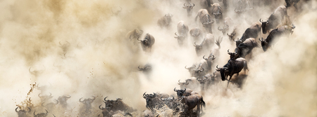 African wildebeest great migration crossing over the Mara River in dusty dramatic scene Banco de Imagens - 115278902