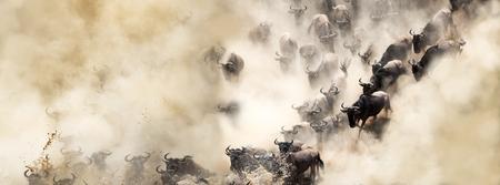 Gran migración de ñus africanos cruzando el río Mara en polvorienta escena dramática