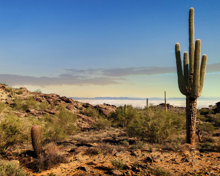 Scenic view of Phoenix Arizona desert in morning from South Mountain hiking trail with saguaro cactus
