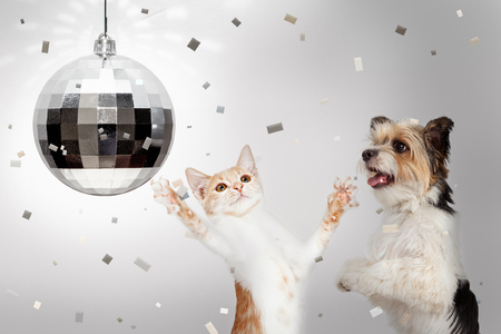 Happy dog and cat dancing at New Yearrs Eve party with disco ball and falling confetti