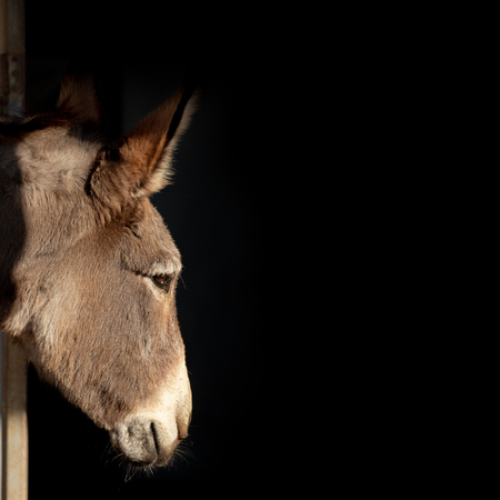 Closeup of donkey face profile in sunlight