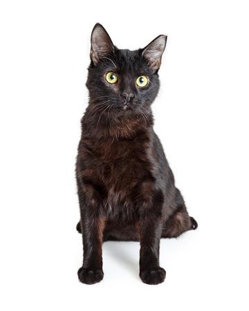 Black cat sitting facing forward lookig at camera