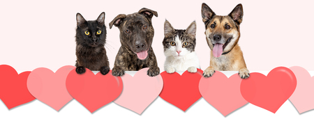 Dogs and cats hanging over row of Valentines Day hearts. Website banner or social media cover.