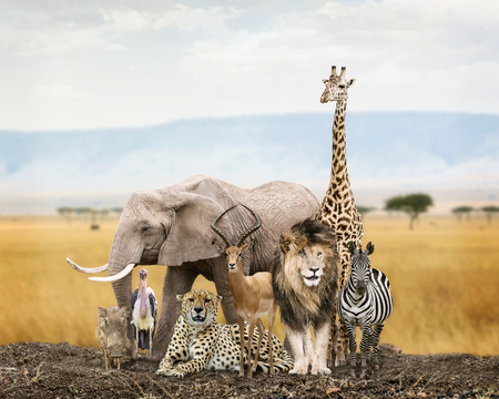 Large group of African safari wildlife animals together in Kenya grasslands