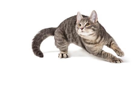 Lindo gatito divertido corriendo sobre fondo blanco.