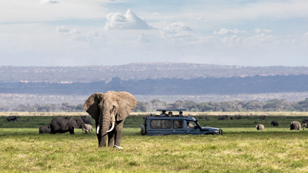 Afrikaanse safariscène met grote olifant en niet-identificeerbare toeristen in safarivoertuig