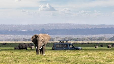 Escena de safari africano con gran elefante y turistas no identificables en vehículo de safari