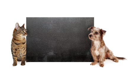 Shaggy dog and tabby cat on sides of blank black chalkboard looking in