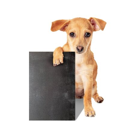 Cute young small breed puppy dog sitting holding blank black chalkboard