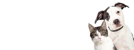 Cute dog and cat closeup peeking out of side of white horizontal web banner