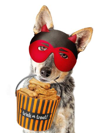 Funny Halloween dog wearing Halloween devil mask carrying trick-or-treat basket filled with biscuits