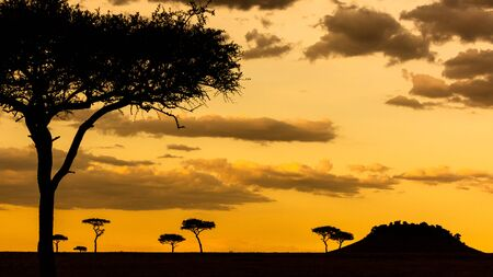 Beautiful African sunset silhouette landscape scene of a field with layers of Acacia trees