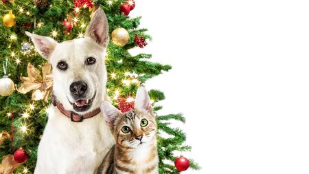Dog and cat together in front of a decorated Christmas tree. White web banner with copy space.