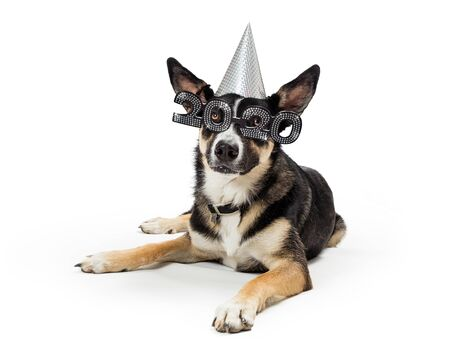 Cute funny dog wearing New Year's Eve 2020 party hat and glasses lying down on white background