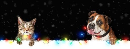 Cute dog and cat hanging illuminated colorful Christmas holiday lights over horizontal web banner or social media cover  Stok Fotoğraf