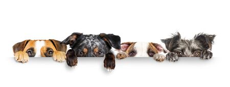 Funny dogs peeking eyes above white horizontal web banner with paws hanging over