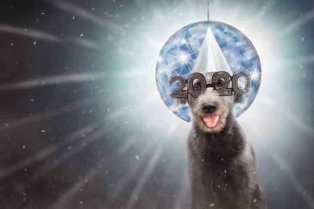 Funny dog wearing 2020 New Year's Eve party glasses in front of disco ball with confetti.