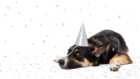 Funny photo of tired party pooper dog lying down wearing hat with confetti falling and on ground Stok Fotoğraf