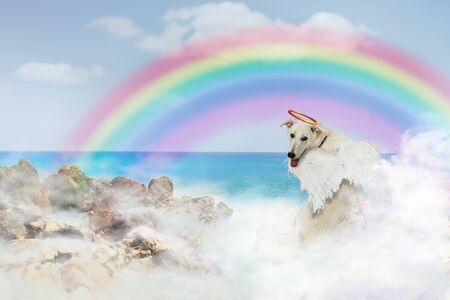 Dog angel with wings and halo crossed over the rainbow bridge sitting in clouds near the ocean
