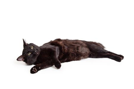 Black cat rolling on side over white background looking up Stok Fotoğraf