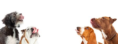 Four hungry dogs with tongues out salivating and looking up into empty room for text on horizontal web banner