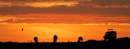 Web banner of African night sunset safari game drive with room for text in open sky