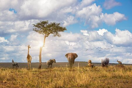 Group of African safai wildlife animals together in a row facing away looking out over the grassland fields of the Masai Mara National Reserve