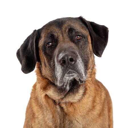 Close up photo of mastiff dog looking at camera with sad expression