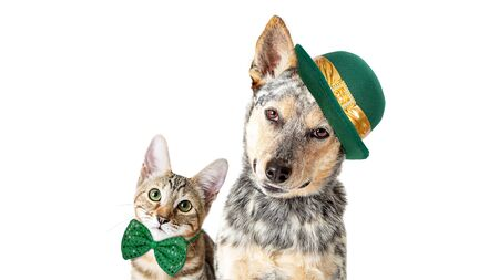 Cute cat and dog celebrating St. Patrick's Day together on white background with room for text