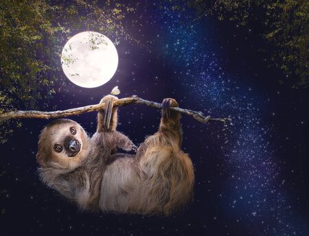 A cute two-toed sloth hanging from a tree branch at night with a full moon and stars glowing in the sky