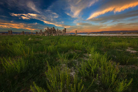 Hardy plants eek out a living the harsh environment of Mono Lake. Stock Photo