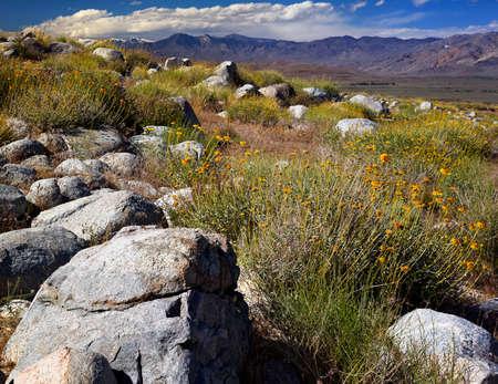 sierra nevada: Alabama hills is a region in the Eastern Sierras with unusual granite formations.
