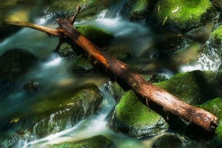 muir: Creek in Muir Woods