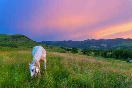Horse in the Carpathian Mountains