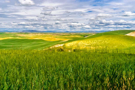 Palouse Region of Washington Stock Photo