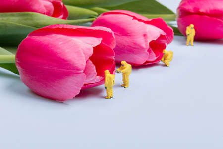 The team investigates the quality of tulip flowers. Concept research Banco de Imagens - 73923453